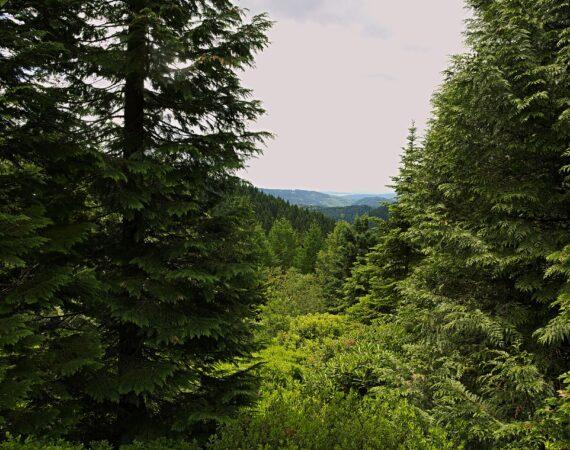 Uebernachtung Thueringer Wald